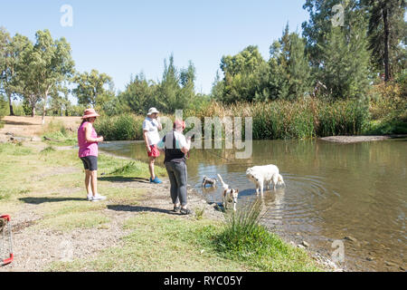 Pet owners walking their dogs to the Peel River Tamworth Australia. - Stock Image