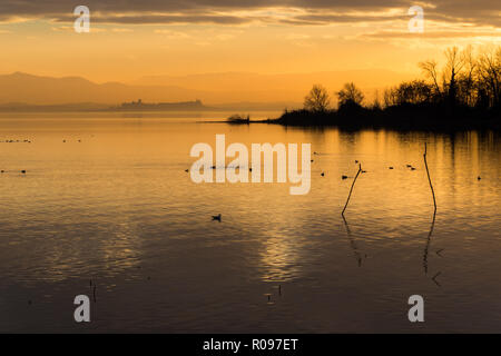 Beautiful view of Trasimeno lake at sunset with birds on water and Castiglione del Lago town in the background. - Stock Image