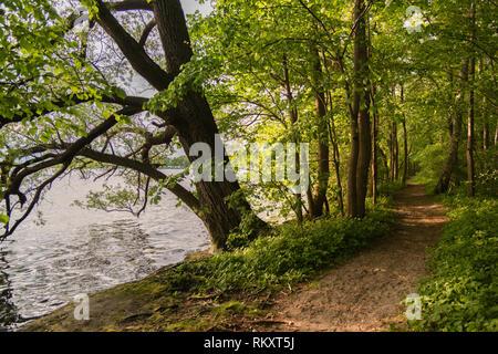 Hiking path on Prinzeninsel, Großer Plöner See or Big Lake Plön,  Plön, Schleswig-Holstein, Germany, Europe - Stock Image