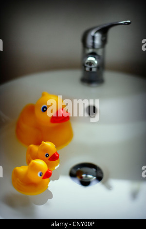 Duck and ducklings in bathroom sink - Stock Image