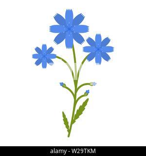 Chicory flower flat icon, wild flowers, plant vector illustration isolated on white background - Stock Image