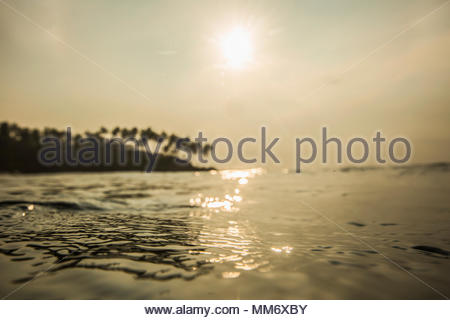 Silhouette of sea wave and palm trees, Indian ocean, Sri Lanka - Stock Image