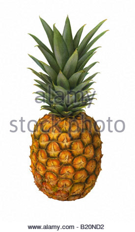Pineapple Standing - Stock Image