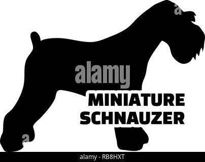Miniature Schnauzer silhouette real with word - Stock Image