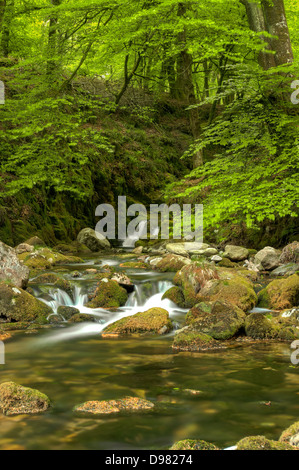 Whitewater rapids on the River Yealm in Dendles Wood National Nature Reserve, in Dartmoor National Park - Stock Image