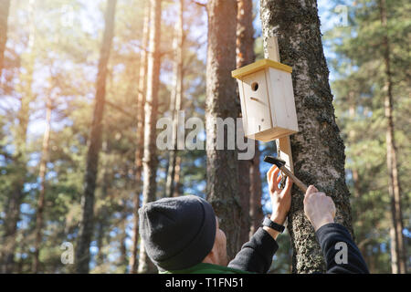 man nailing birdhouse on the tree trunk in the forest - Stock Image
