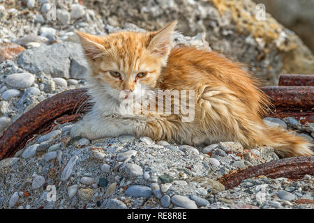 Kitten Sitting On An Ancient Wall, Rhodes Town, Greece - Stock Image