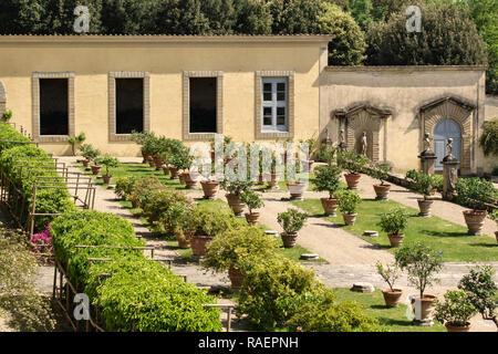 The Medici Villa di Castello (Villa Reale), Sesto Fiorentino, Florence, Italy. The 15c citrus garden, where lemon trees and other citrus are grown - Stock Image