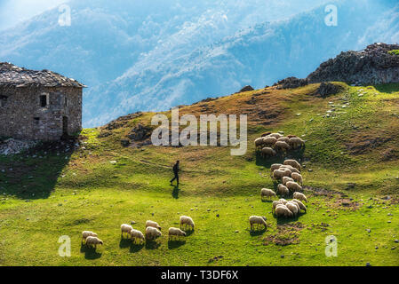 A herd of sheep in the mountains. Mountain range at spring - Stock Image