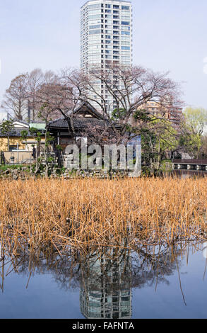 Reflection of a high-rise building in Shinobazu Pond, Ueno Park, Tokyo with traditional houses below - Stock Image