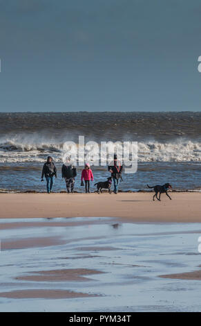 A family and their two black labrador dogs on the beach at Alnmouth, Northumberland on a cold windy winter day in bright sunshine and a rough sea - Stock Image