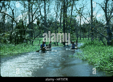 Canoeing in flat waters belonging to the Amazon system; near Manaus, Brazil. - Stock Image