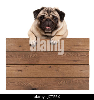 cute smiling pug puppy dog hanging with paws on blank wooden promotional sign, isolated on white background - Stock Image