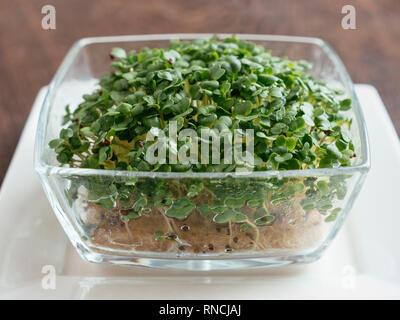 Broccoli Raab (Brassica rapa var. cymosa) sprouts. - Stock Image