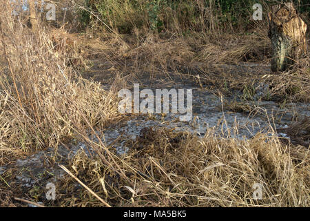 A frozen, flodded meadow with bare and broken winter grass straw in early spring sunshine and cold weather. - Stock Image