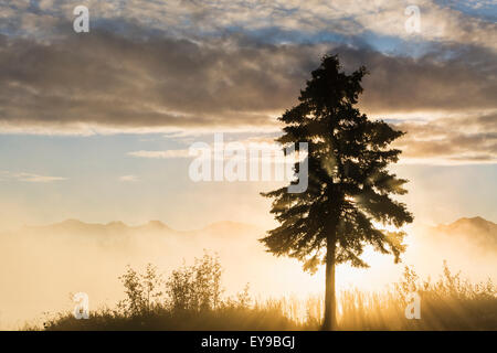 Scenic View Of Fog And Sunrays Coming Through A Tree Along Six-Mile Lake Sunrise, Southcentral Alaska - Stock Image