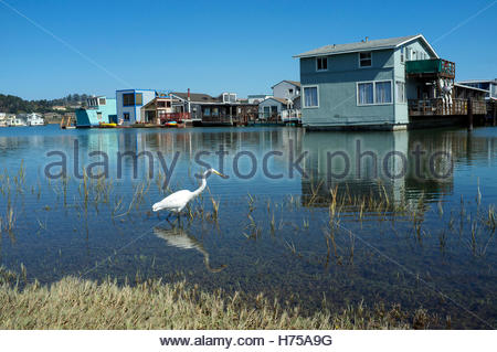 House boats at Kappas Marina, in Sausalito, Marin County, California, USA. - Stock Image