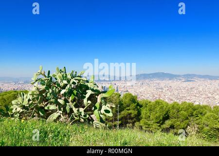 Barcelona, Spain, October 2018. Large cactus in the grounds of Castle / Castell Mont Juic. Hot sunny afternoon. - Stock Image