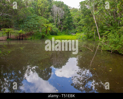 Pond On A Nature Reserve - Stock Image