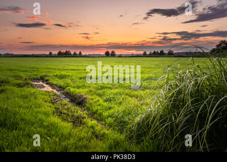 Landscape by sunset with red sky. Green meadow. - Stock Image