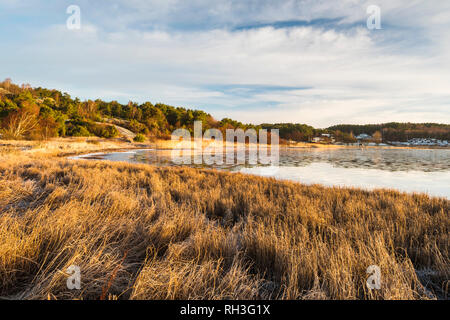 View of reed on seacoast - Stock Image
