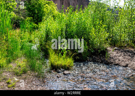 Park with plants and El Rito de los Frijoles river on Main Loop trail path in Bandelier National Monument in New Mexico - Stock Image