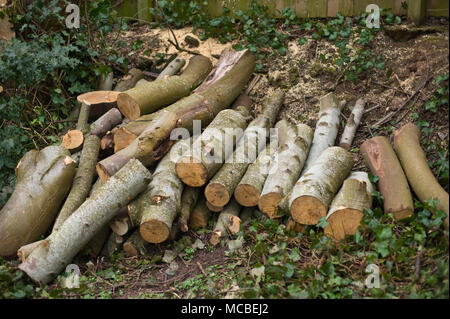 Logs for firewood from felled trees in a picnic area at Hay-on-Wye Powys Wales UK - Stock Image
