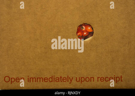 Packaging showing tomato seed envelope and enticing 'open' text - Stock Image