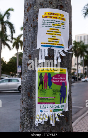 Colorful printed fliers stapled to a tree advertising for paid volunteers. - Stock Image