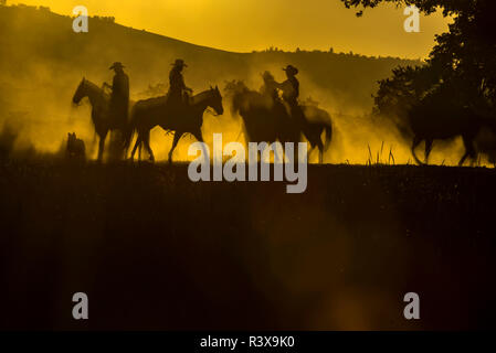 USA, California, Parkfield, V6 Ranch four silhouetted horses and riders in golden early morning light. (MR) - Stock Image