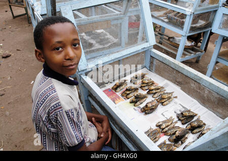 geography / travel, Tanzania, young one man selling Pisces on the market of Mto Wa Mbu, Additional-Rights-Clearance - Stock Image