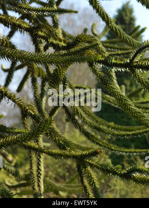 exotic tree branches - Stock Image