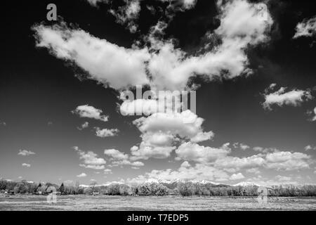Black & white view of beautiful clear sky with cumulus clouds; snow capped Rocky Mountains on horizon; Vandaveer Ranch; Salida; Colorado; USA - Stock Image