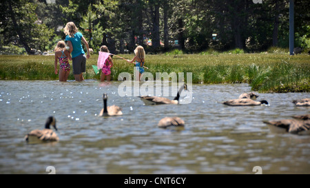 young happy girl butterfly nature fragile happiness wildlife cheerful geese - Stock Image