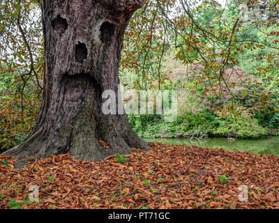 Ghost tree in the forest - Stock Image