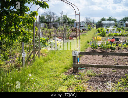 His and Hers allotment plots in England UK. - Stock Image