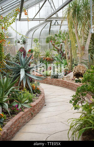 tropical plants inside a greenhouse - Stock Image