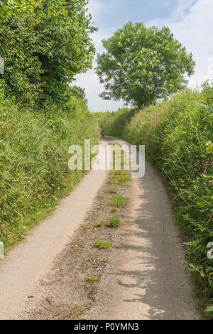 Quiet Cornish country lane and hedgerow. - Stock Image