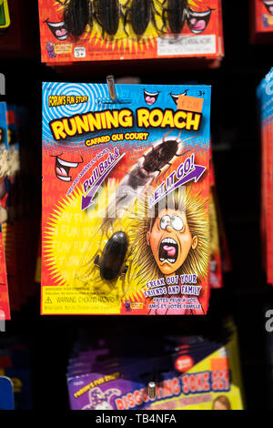 RUNNIG ROACH. A gift for that special someone in your life who's hard to shop for. - Stock Image