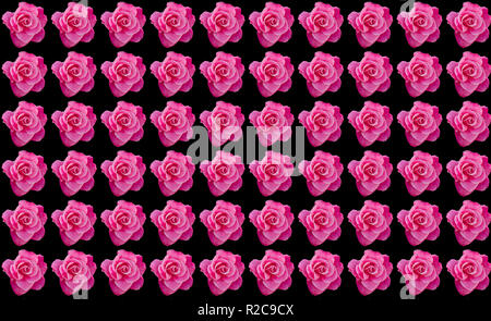 Pink roses with black background with copy space, idea or concept for a romantic message, proposal, Valentine day, or pattern for wallpapers - Stock Image