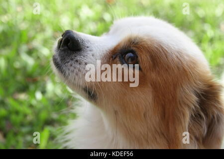 street dog abandoned victim of animal abuse - Stock Image