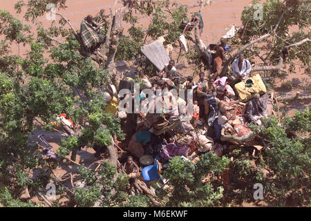 Floods in Mozambique, March 2000; A South African Air Force helicopter resucues people who have climbed a tree and - Stock Image