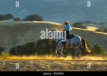 USA, California, Parkfield, V6 Ranch cowgirl on a running horse in early morning light (MR) - Stock Image