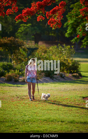 Young woman walking her dog in the park - Stock Image