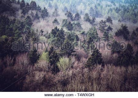 Romantic view in the forest Gunzenhausen - Stock Image