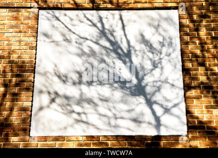 shadows of tree branches and leaves on urban walls in bright sunlight - Stock Image