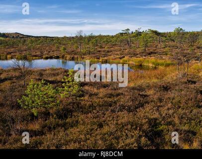 Deutschland, Bayern, Naturpark Bayrische Rhön, UNESCO-Biosphärenreservat, Naturschutzgebiet Schwarzes Moor, Kiefern am Moorsee - Stock Image