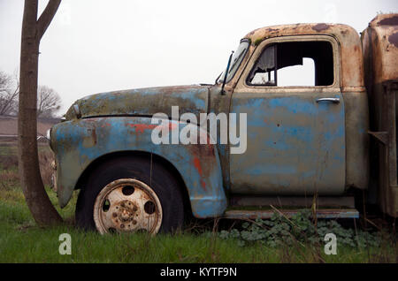 An old Chevy truck has been sitting in one spot for so long that a tree trunk has grown around it. - Stock Image