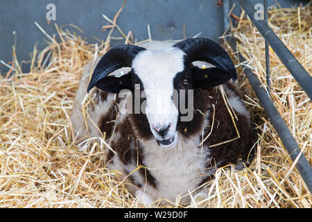 90th Kent County Show, Detling, 6th July 2019. - Stock Image
