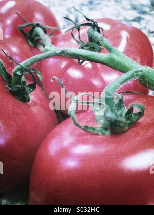 Tomatoes - Stock Image
